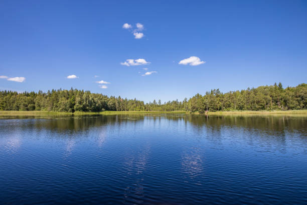 A calm lake on a sunny summers day. There are some white clouds in the blue sky, and the view shows a pine forest across the water on  the horizon. Photo from Sweden, just outside Stockholm.