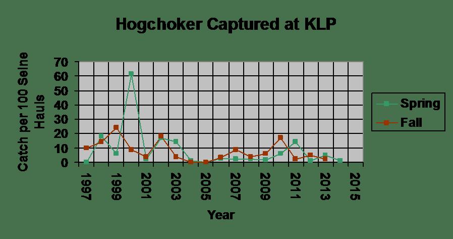 The amount of hogchoker caught between 1997-2015