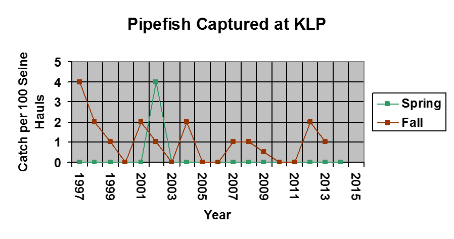 A graph of pipefish caught between 1997-2015