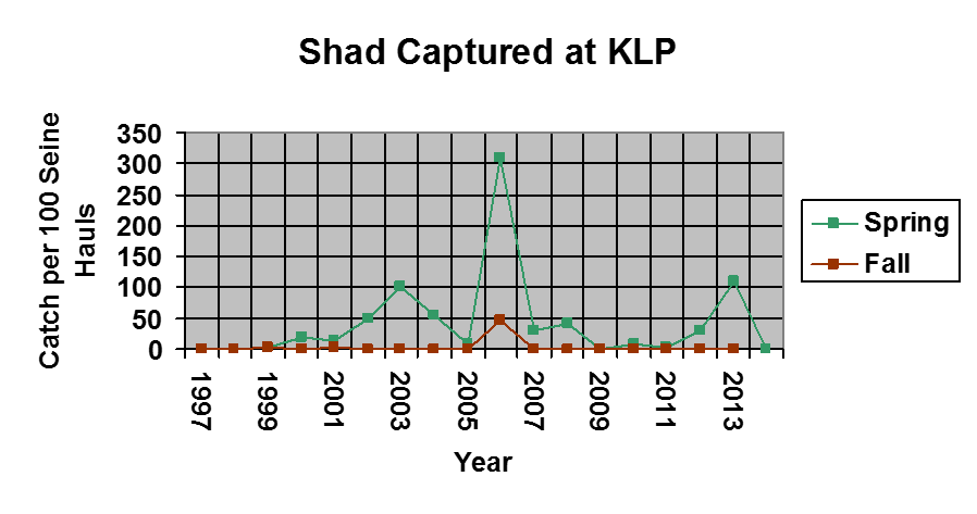 The amount of shad caught from 1997-2015