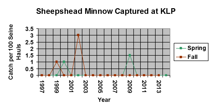 A graph showing the amount of sheepshead minnow caught between 1997-2015
