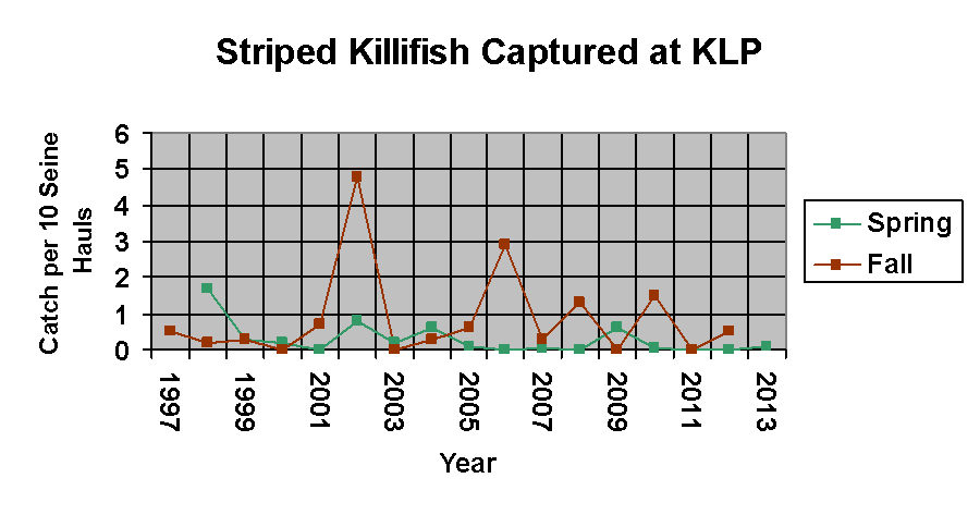 A graph showing the number of Striped Killifish found from 1997-2013