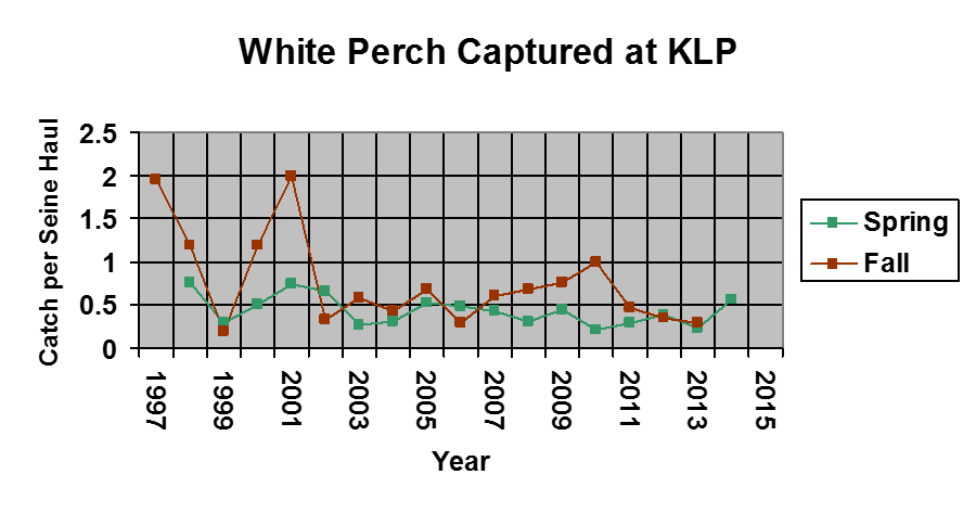 A graph showing the amount of white perch caught from 1997-2015